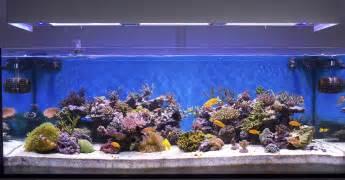 selecting the best aquarium tanks connie s tropical fish
