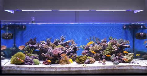 aquarium design wallpaper aquarium fish reflection 4240104 1920x1080 all for desktop