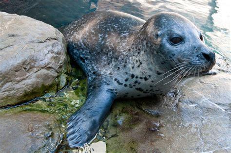 Hiasan Aquarium Orca Seal photo collections new aquarium