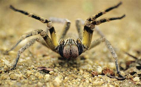 spider web photos weneedfun wandering spider weneedfun