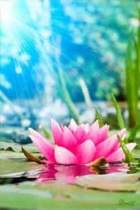 Lotus Animation El Mundo De Paz En Nosotros Flor De Loto