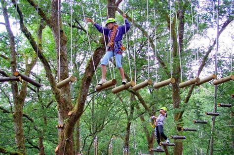 Trees Top Murah promo bali tree top murah harga termurah di korina tour