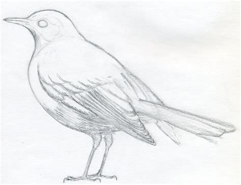 Drawing Birds by How To Draw A Bird And What You Need To