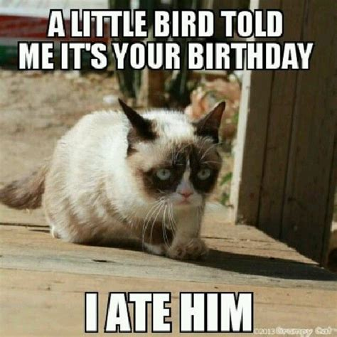 Sarcastic Cat Meme - pin by madelyn on funnies pinterest