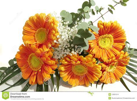 cerco immagini di fiori mazzo di fiori gerbera fotografia stock immagine di