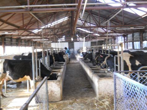 modern cow farm house plan modern cow shed design modern house