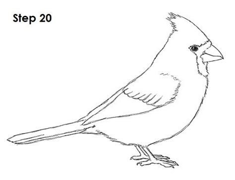pattern drawing bird 179 best aa cardinals images on pinterest cardinals
