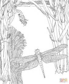 Steunk Dragonfly Coloring Page Coloring Pages Dragonfly Coloring Pages
