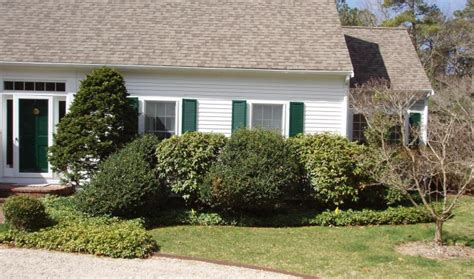 Bushes For Front Of House by Tree Services Hoxie Landscaping Cape Cod Landscaping