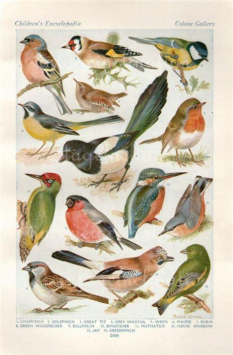vintage illustration vintage bird illustration on pinterest walton ford bird