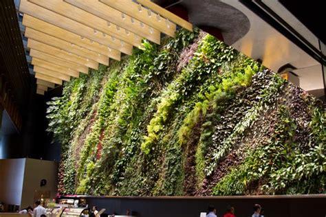 indoor plants singapore indoor plants dulkeith