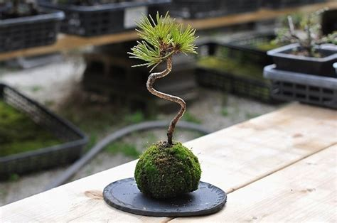 Kitchen Design Seattle 10 Easy Pieces Kokedama Plants Gardenista