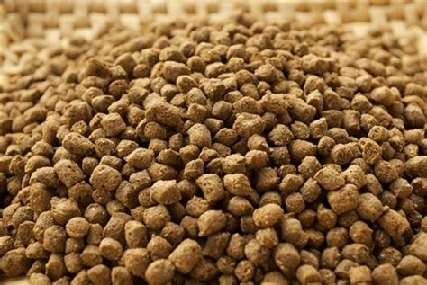 Pelet Apung 99 aquaorganic fish feed