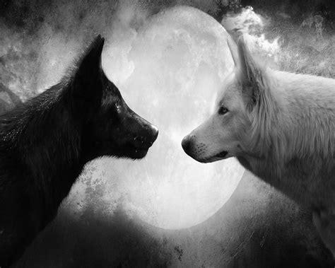 imagenes en blanco y negro de lobos libera psi