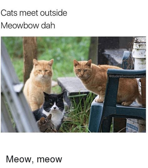 Cat Meow Meme - cats meet outside meowbow dah odudewheresmy meme meow meow