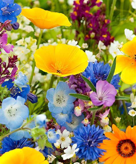 Flower Seed Mats by Seed Mat Lawn Flower Mix