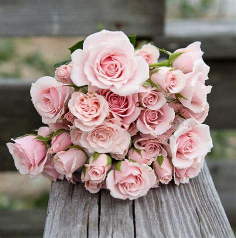 Mawar Slit buon compleanno come dirlo con un fiore in modo originale