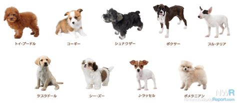 list of puppy nintendogs cats breed lists revealed news nintendo world report