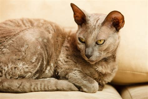 old cat disease dementia in older cats symptoms care and treatment