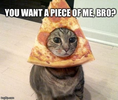 Lesbian Cat Meme - pizza cat imgflip