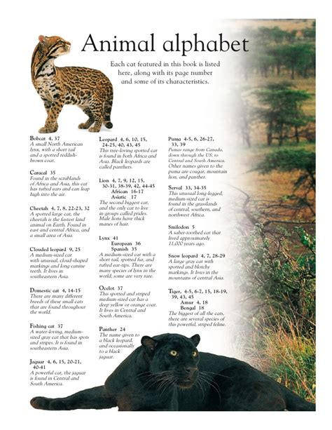 libro the leopard grandes felinos big cats