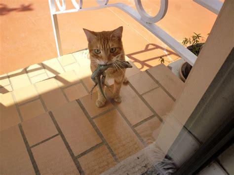 Alat Pengusir Kucing Paket Pengusir Kucing Cat Repellent pest how can i keep lizards away from my room