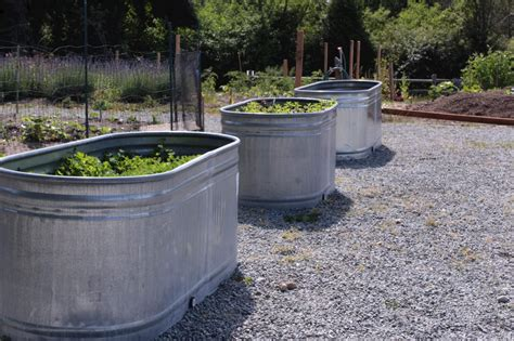 galvanized water trough planters insteading