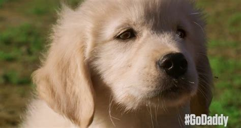 industrial puppy godaddy puppy commercial ecanadanow