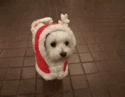 merry christmas dog gif find share  giphy