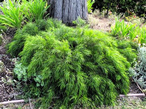 plants for conditions late to the garden my favorite drought tolerant plants