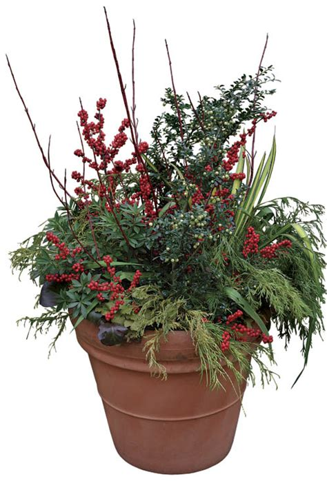 Modern Balcony Planters wonderful winter containers fine gardening