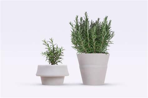 piante da vaso per esterni piante da vaso per esterno piante per giardino piante