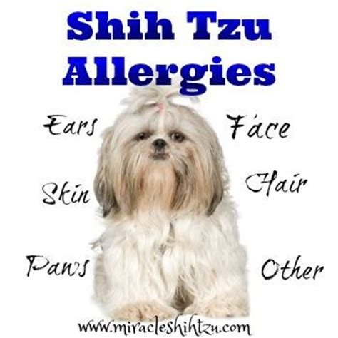 shih tzu itching dandruff in dogs causes treatments and cures