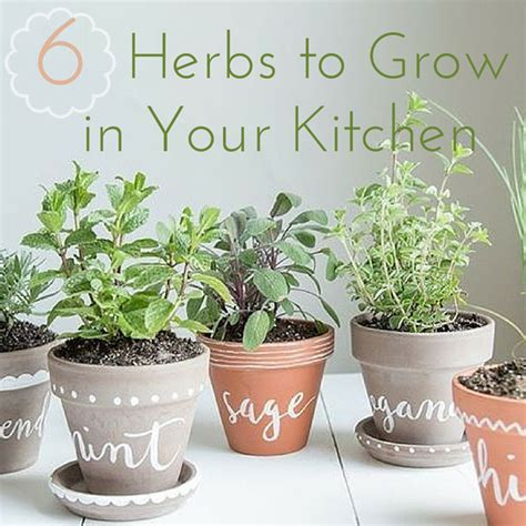 grow herbs in kitchen 6 herbs to grow in your own kitchen garden kimberly