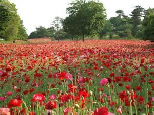 scenery pictures fleurs de printemps des chs