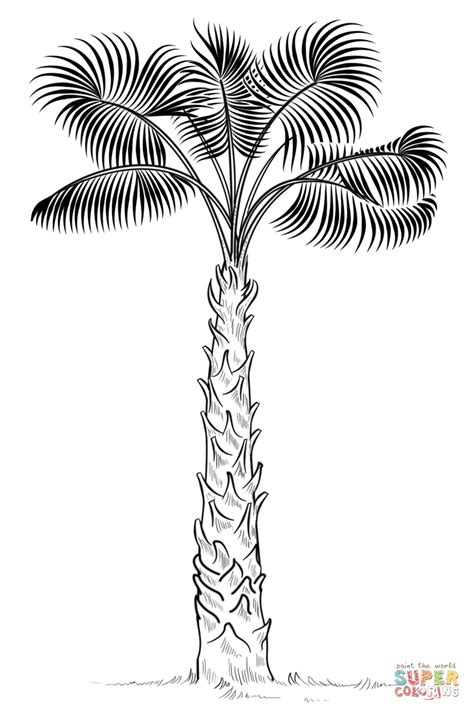 coloring pages palm leaves cabbage palm tree coloring page free printable coloring