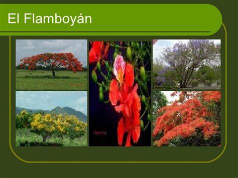 isla de mona de puerto rico florafauna datos flora y fauna de puerto rico