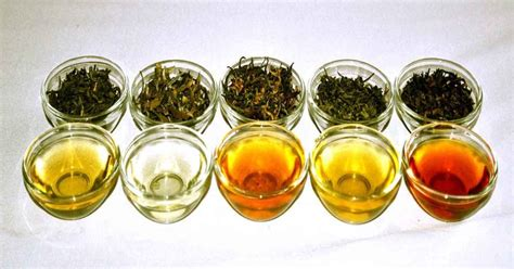 my free thinkings blogs of abdur rouf does green tea have caffeine source