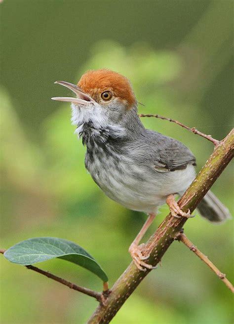 Best 25 Small Birds Ideas On Pinterest Birds Pretty Small Bird Ideas For