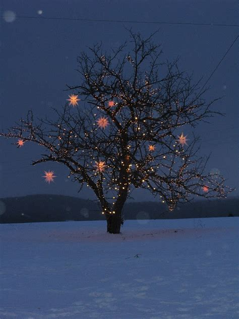Light Up Your Out Door Tree Winter Experience Pinterest Light Up For Tree