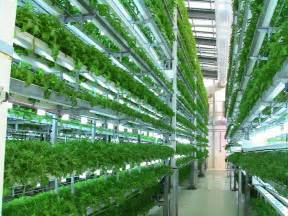 Vertical Hydroponic Gardening Systems Aquaponics And Hydroponics Growing Salad Vegetables In