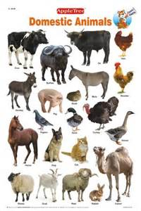 educational charts classic charts domestic animals chart woobooks children books