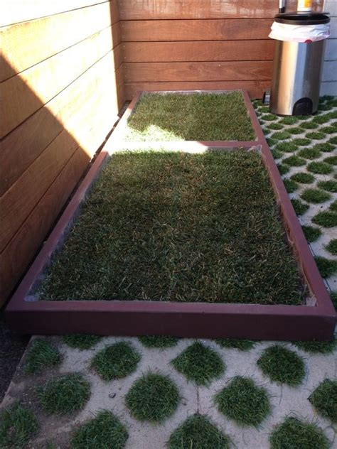 grass patch for dogs 2 large grass pad boxes pushed together to create a large patch of real