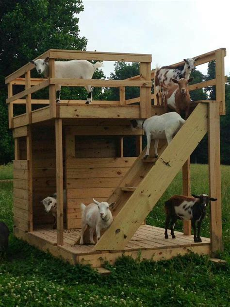 goat house best 25 pygmy goat house ideas on pinterest