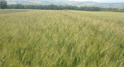 seme catania sis societ 224 italiana sementi dettaglio prodotti simeto