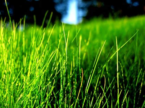 what color is grass bright colors images green grass wallpaper photos