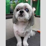 White German Shepherd Lab Mix Puppies | 1200 x 1600 jpeg 280kB