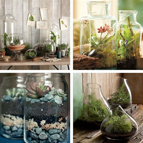Indoor Plants Ideas | decorating dilemma house plants decorator s notebook