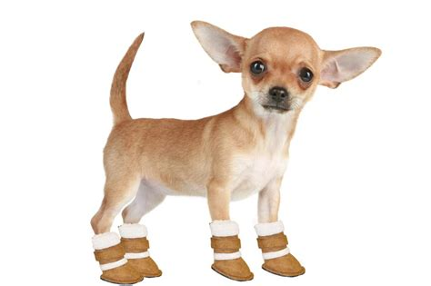 puppy boot c ugg booties for dogs