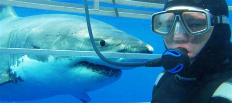 cage dive with sharks great white shark cage diving lincoln experience oz